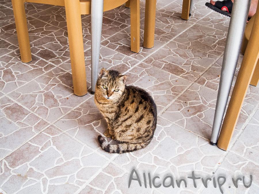 кошки в отелях Сиде