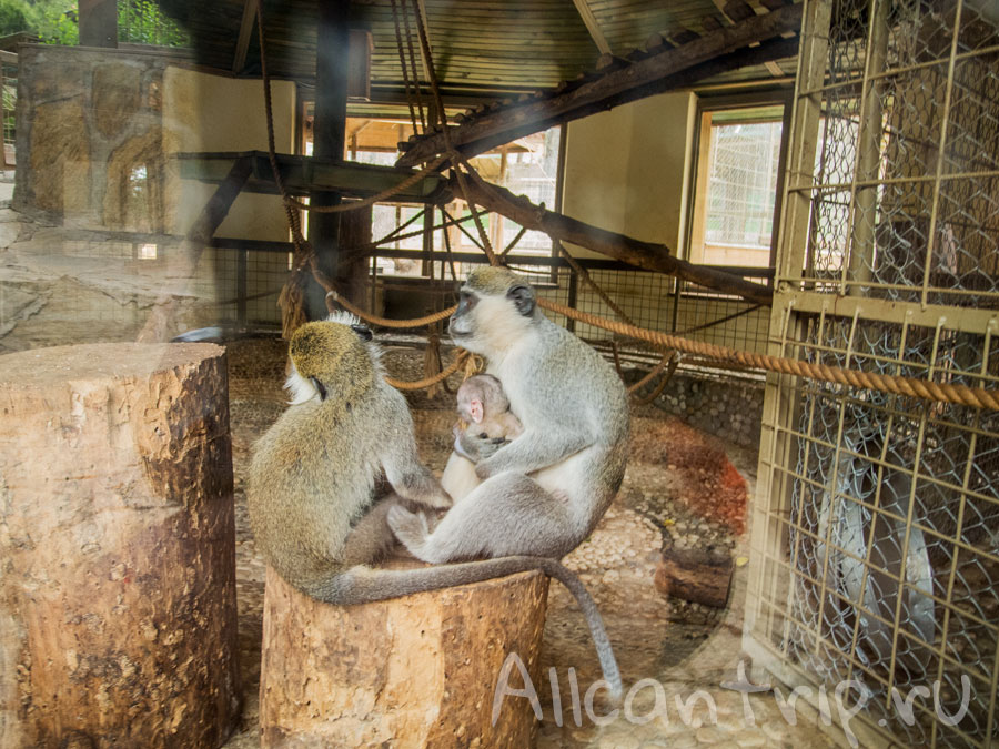 в зоопарке Анталии
