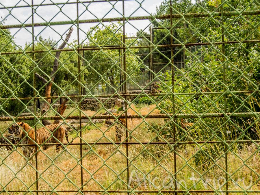 тигры в зоопарке Анталии