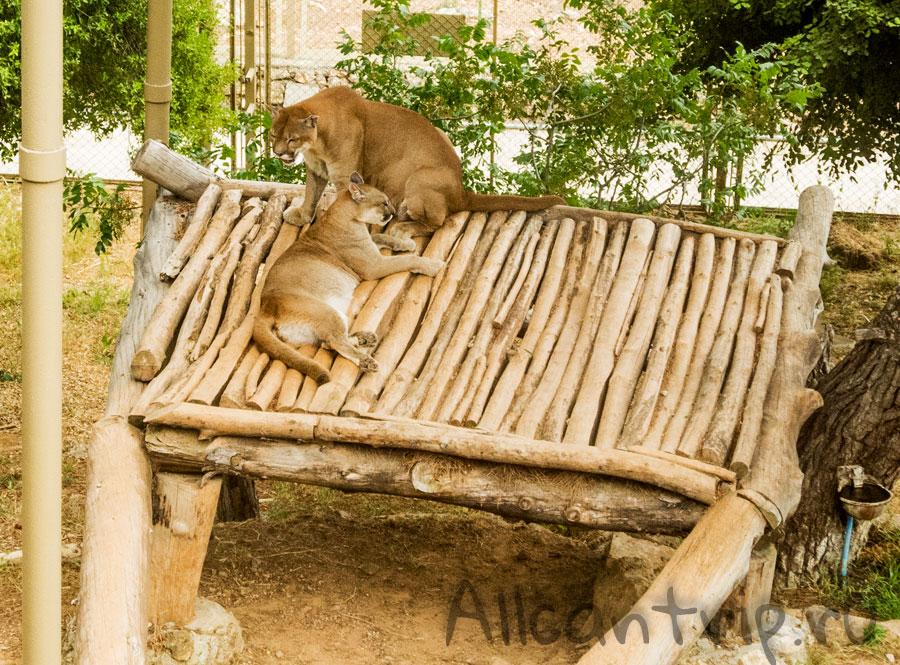 львы в зоопарке Анталии