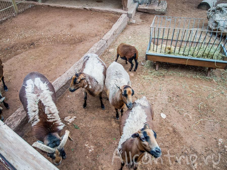 козы в зоопарке Анталии