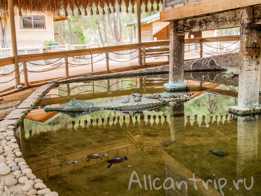 черепахи в зоопарке Анталии