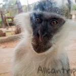 Чем нас удивил зоопарк Анталии