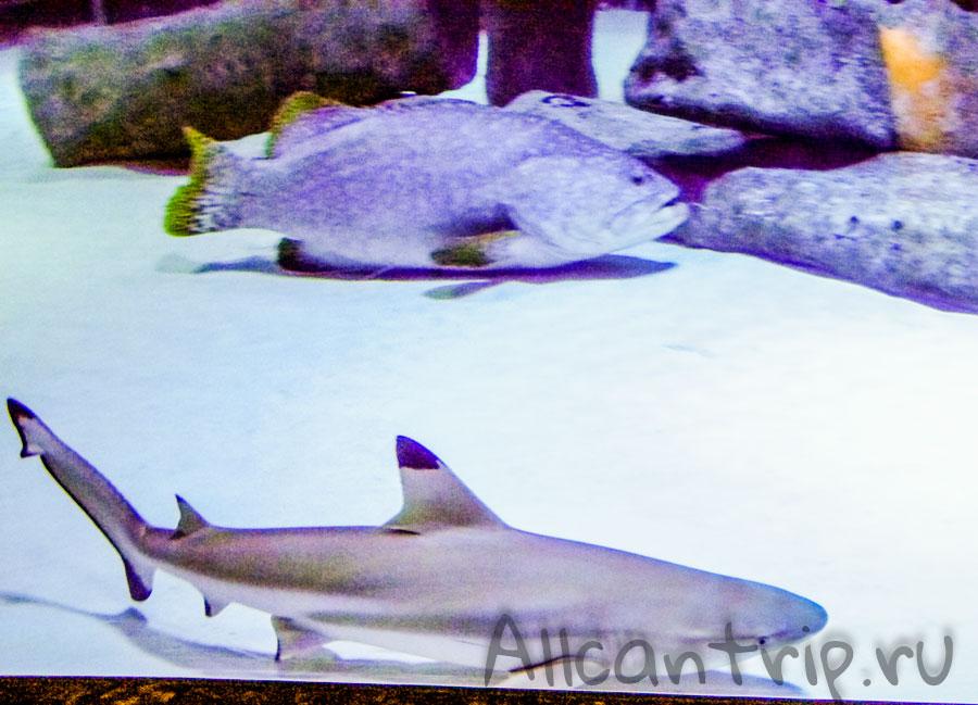 акулы на территории аквариума Анталии