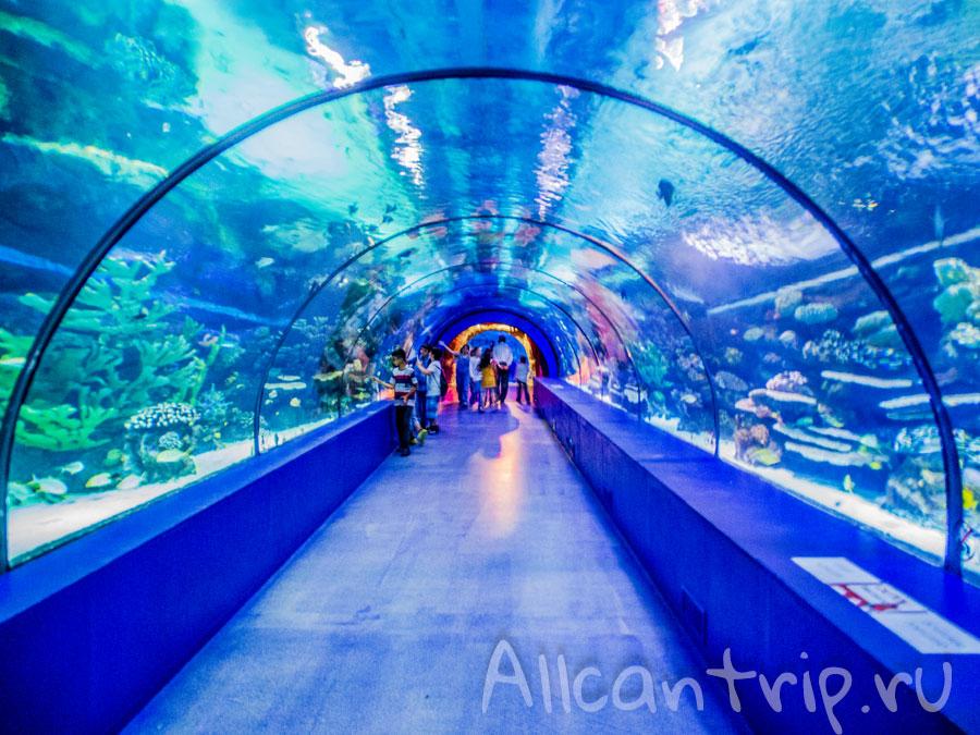 туннель в аквариуме Анталии