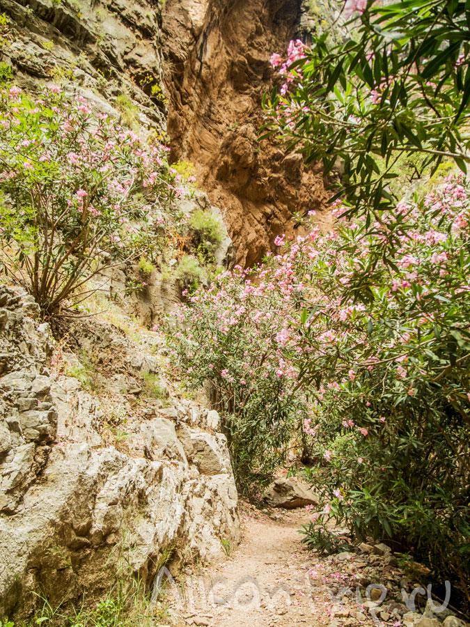 долина бабочек в олюдениз турция