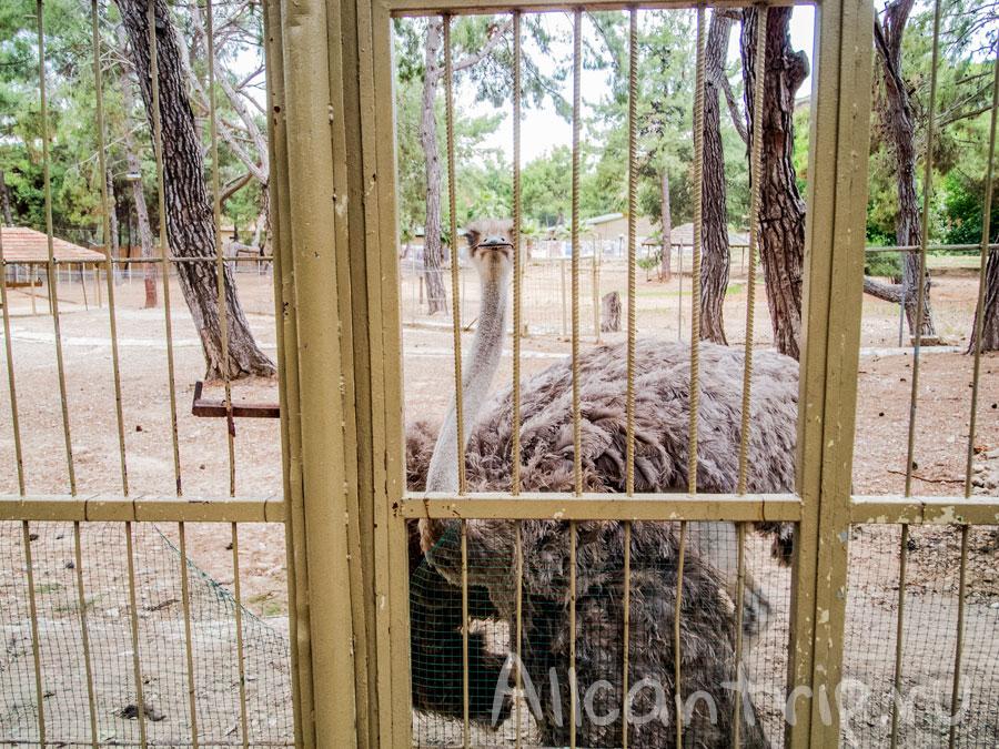 страус таблички указатели в зоопарке Анталии
