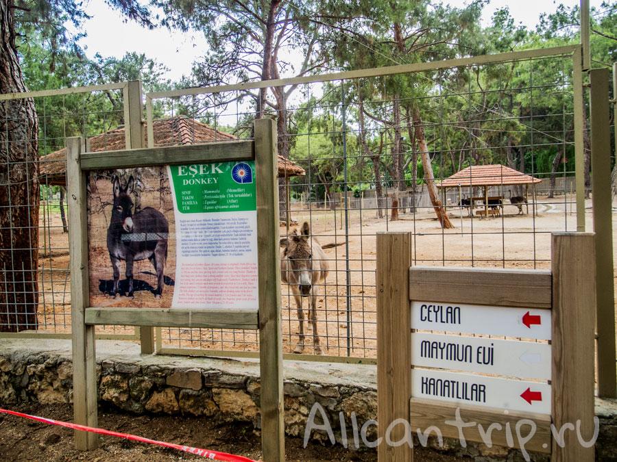 ослик ИА таблички указатели в зоопарке Анталии