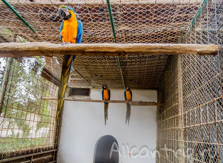 попугай Ара в зоопарке Анталии
