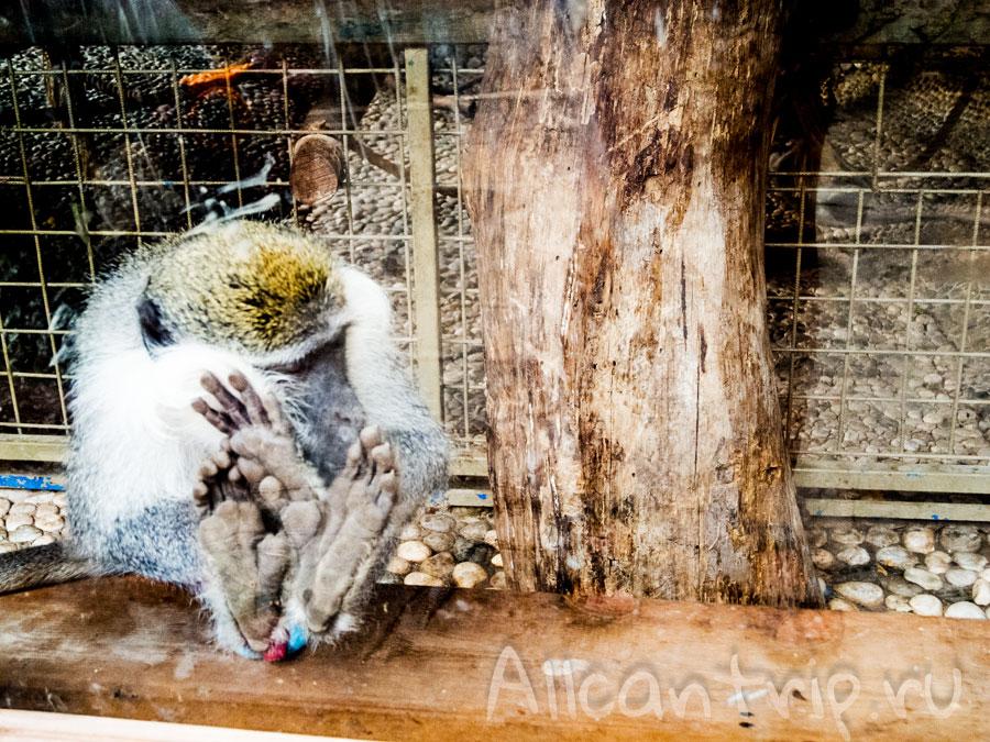 обезьянка в зоопарке Анталии