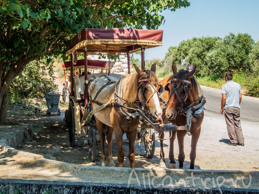 прокатиться на лошади в Эфесе