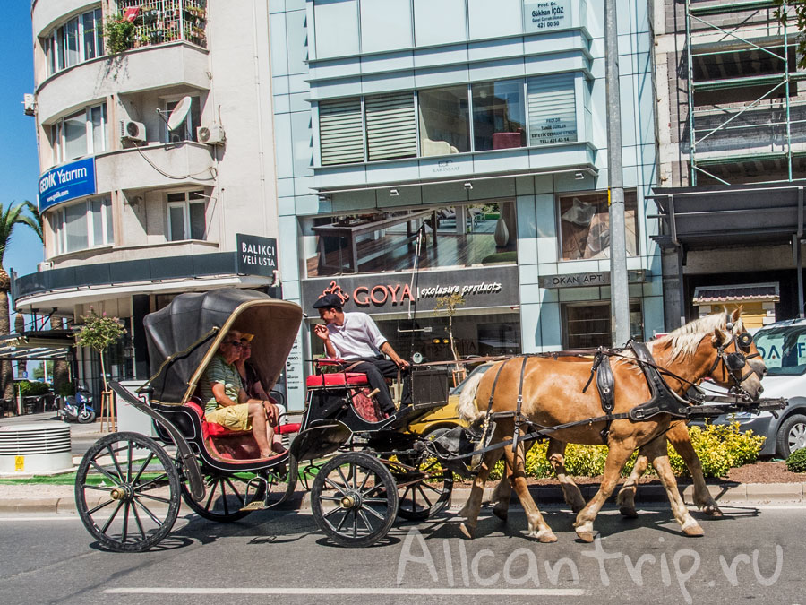 лошади в Измире
