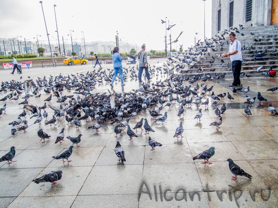 голуби на площади еминёню