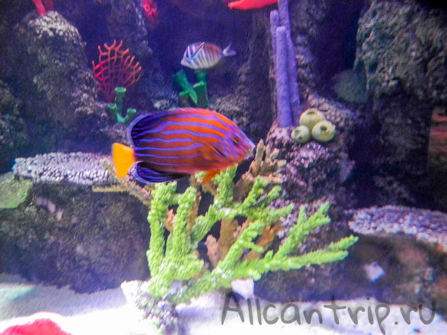 фото рыб в аквариуме стамбула