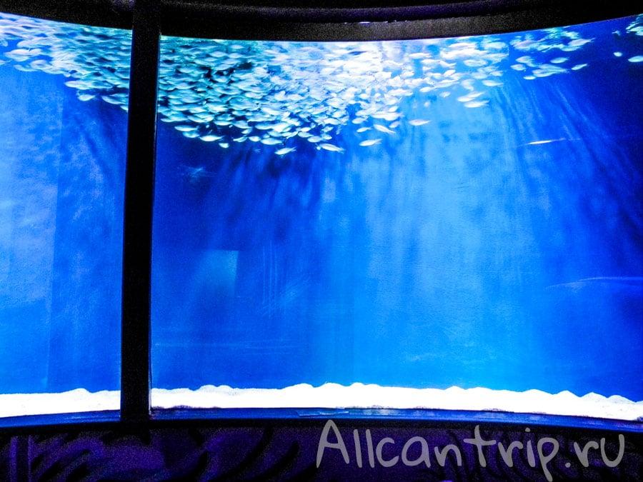 в аквариуме стамбула