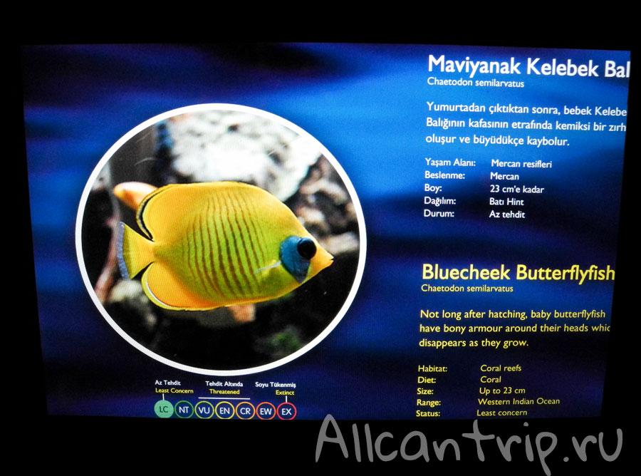 в аквариуме Sea life в стамбула