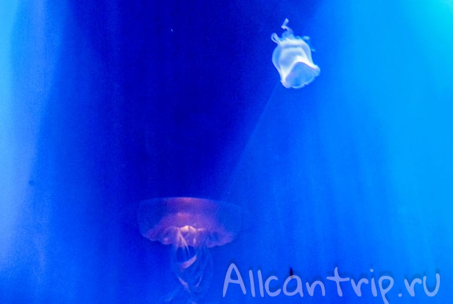 медузы в аквариуме стамбула