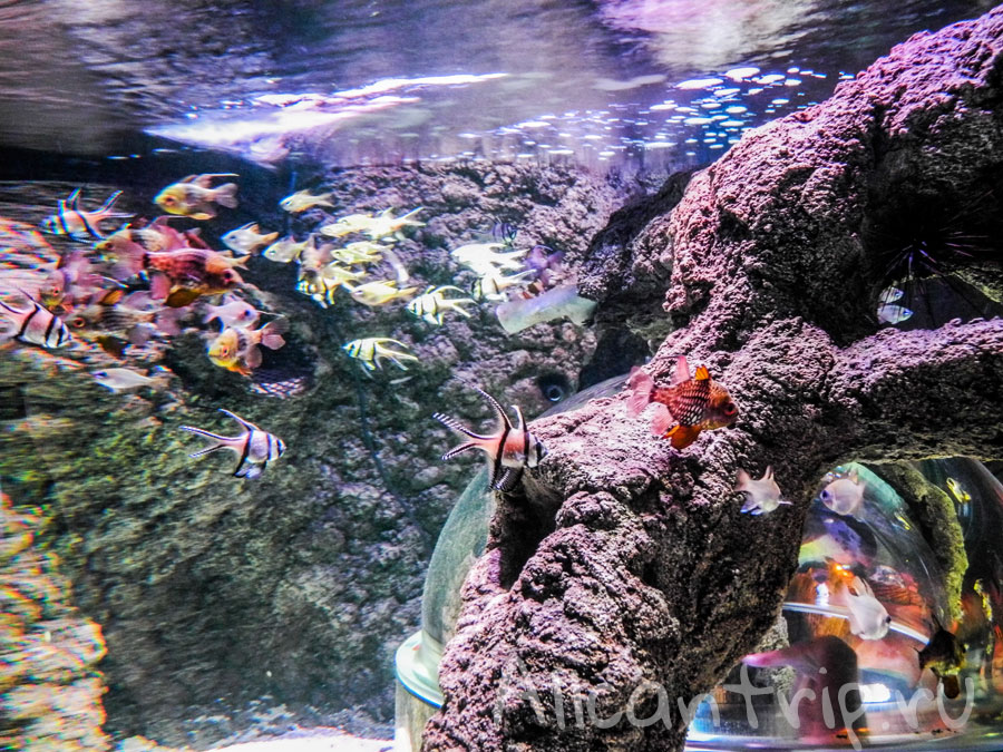 океанариум в стамбуле