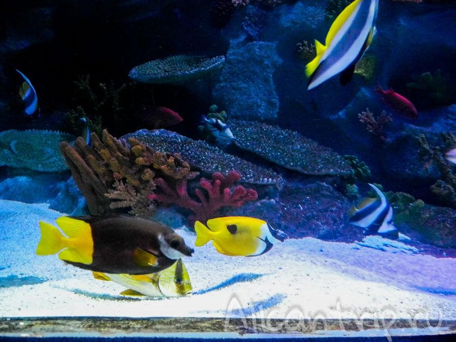 подводное царство в стамбуле