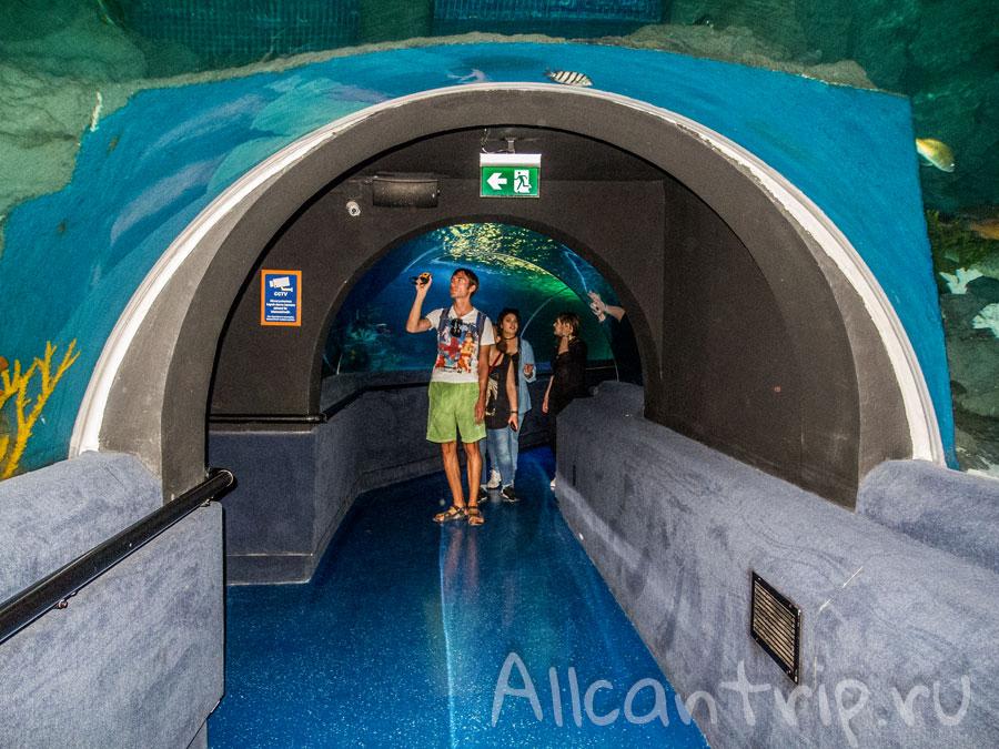 туннельный аквариум в стамбуле