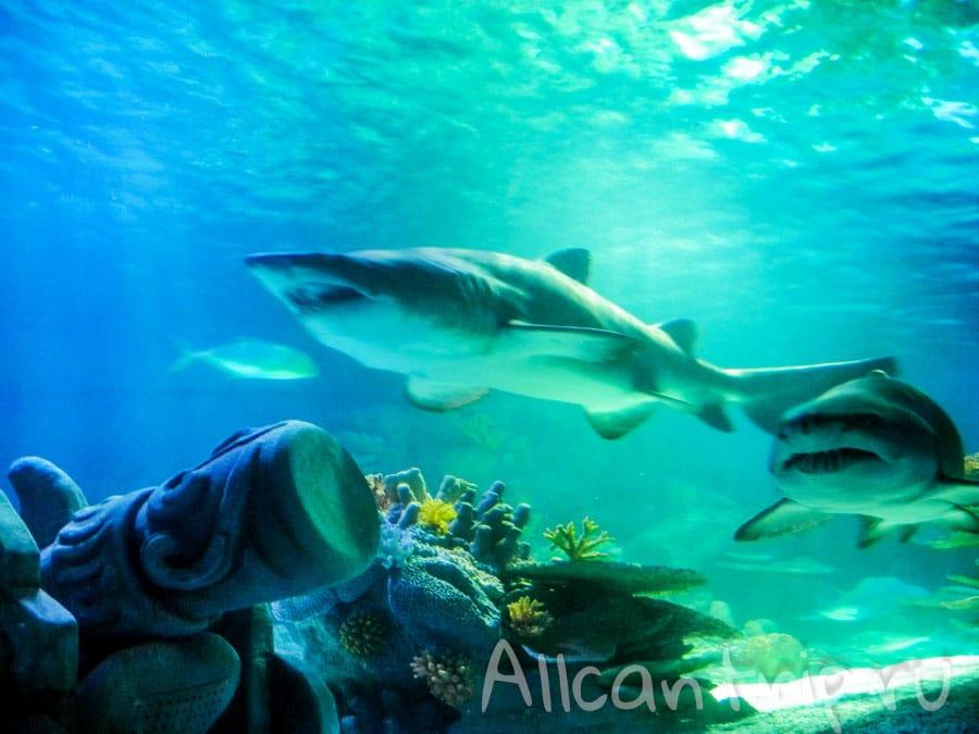 акулы в стамбульском аквариуме