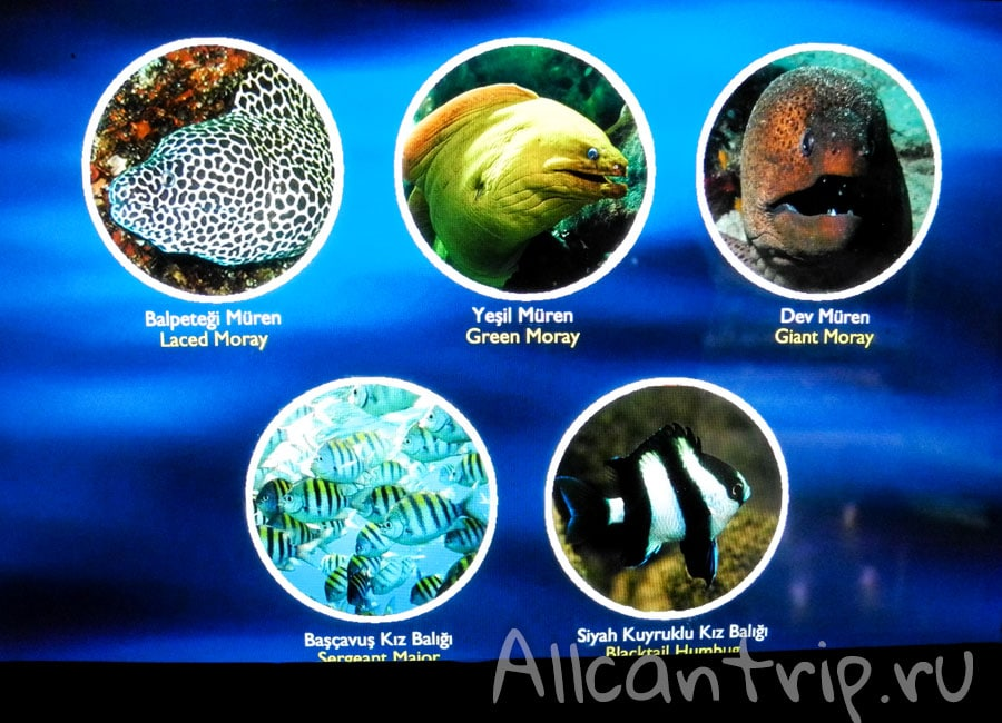 в океанариуме стамбула фото