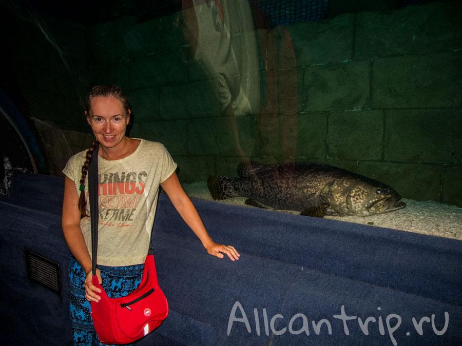 крутые рыбы в океанариуме стамбула
