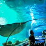 Аквариум в Стамбуле Sea life – как оказаться на дне океана в турецком мегаполисе