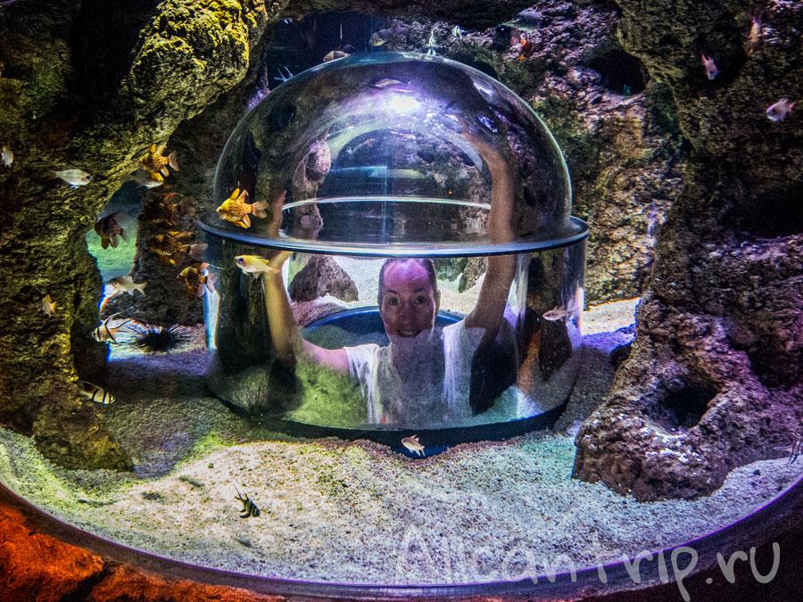 в стамбульском океанариуме Sea Life