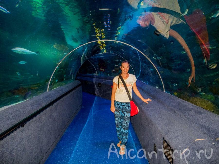 туннель в стамбульском океанариуме Sea Life
