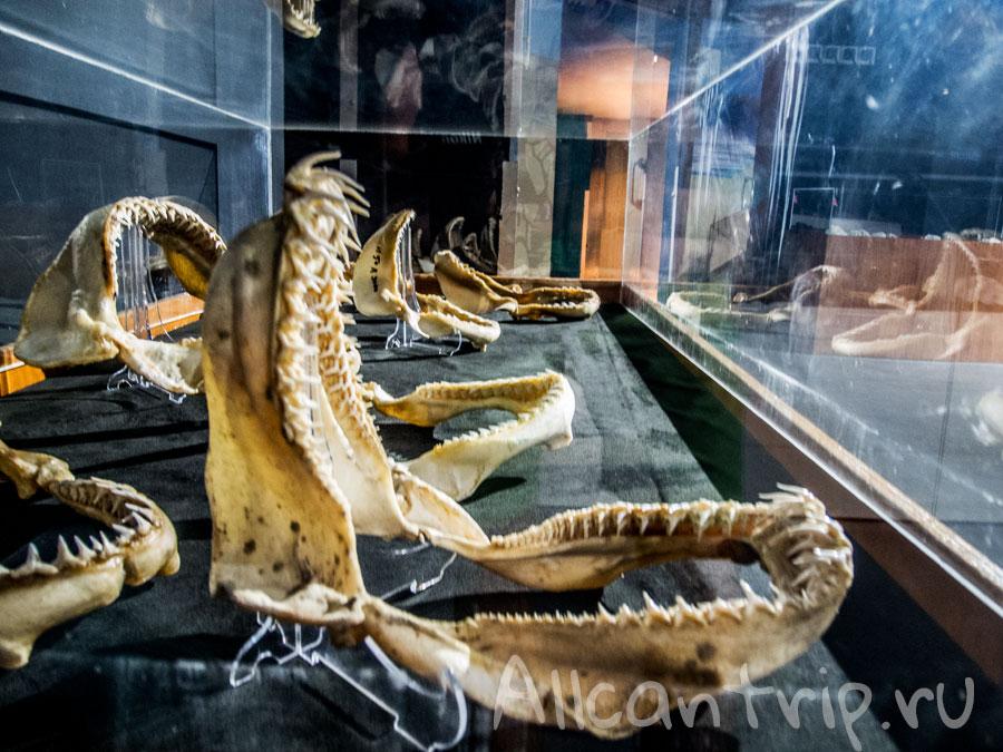 челюсти в стамбульском океанариуме Sea Life