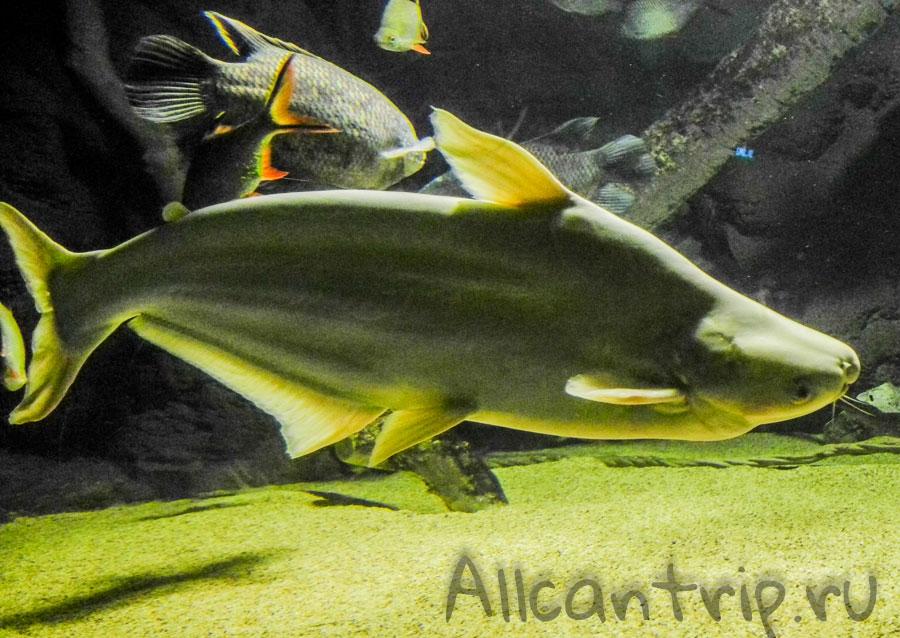 рыбы в стамбульском океанариуме Sea Life