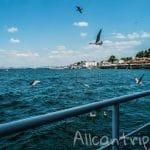 Принцевы острова – как добраться из Стамбула, наш маршрут и чайки