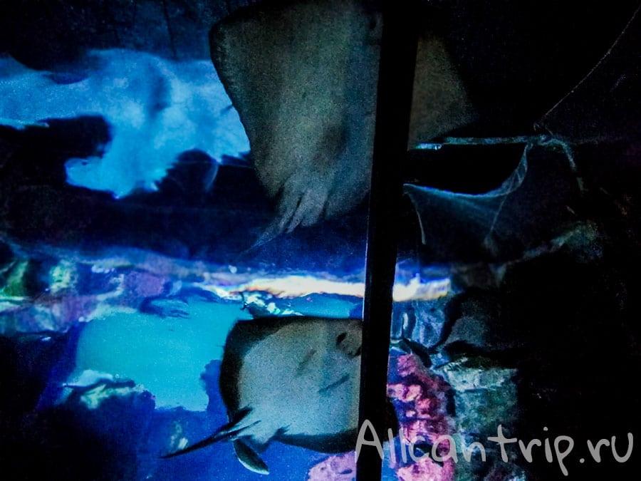 городской аквариум в милане