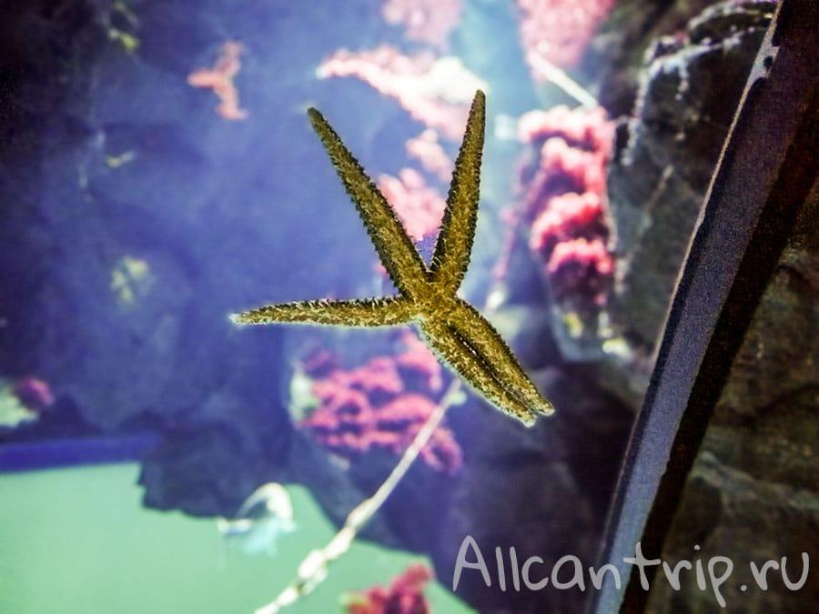 городской аквариум в милане фото