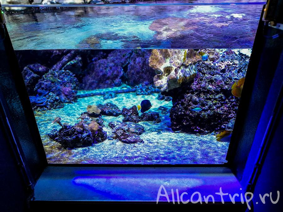 аквариум в милане