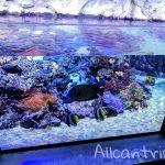 Городской аквариум Милана – нетипичное развлечение в городе моды