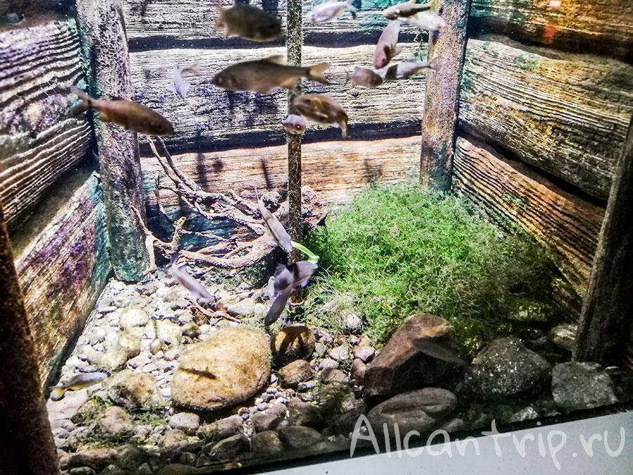 городской аквариум милана