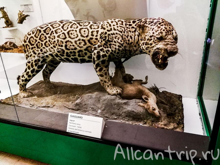 музей естественной истории милан