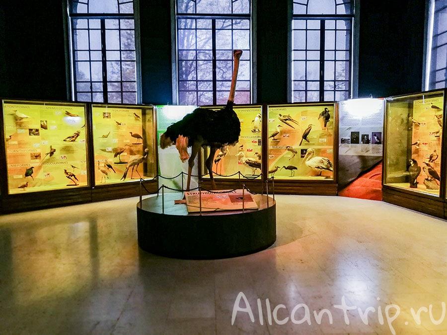 интересный музей в милане