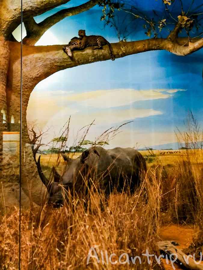 nature history milan