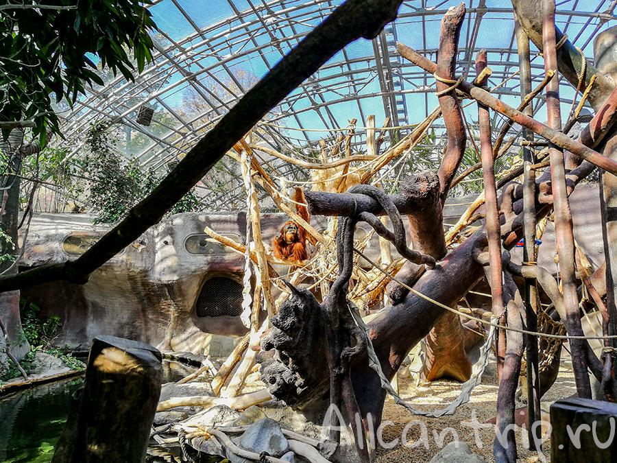 зоопарк праги фото