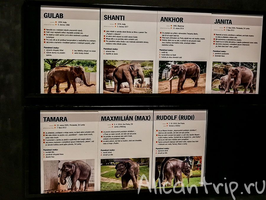 зоопарк праги слоны