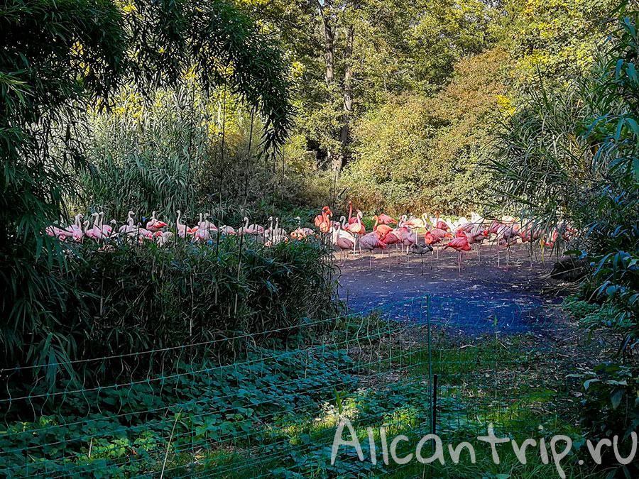 пражский зоопарк фламинго