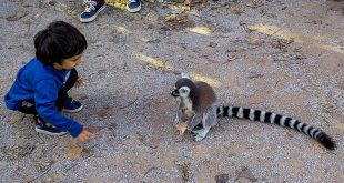 пражский зоопарк лемур