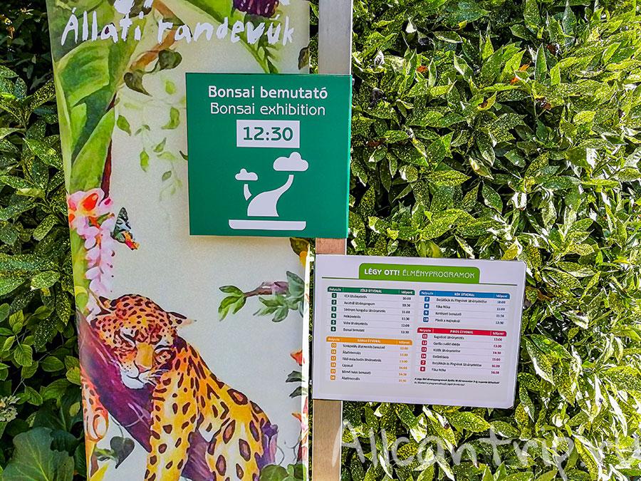 зоопарк в будапеште расписания