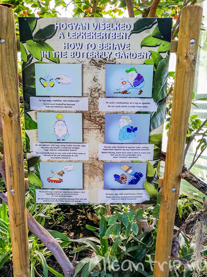 зоопарк в будапеште для детей
