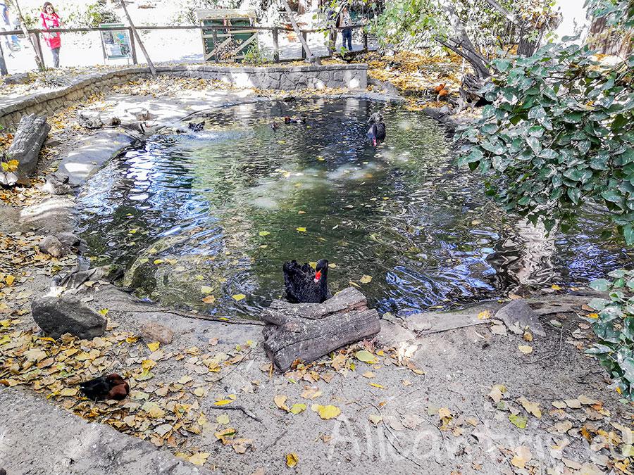 зоопарк в будапеште фото