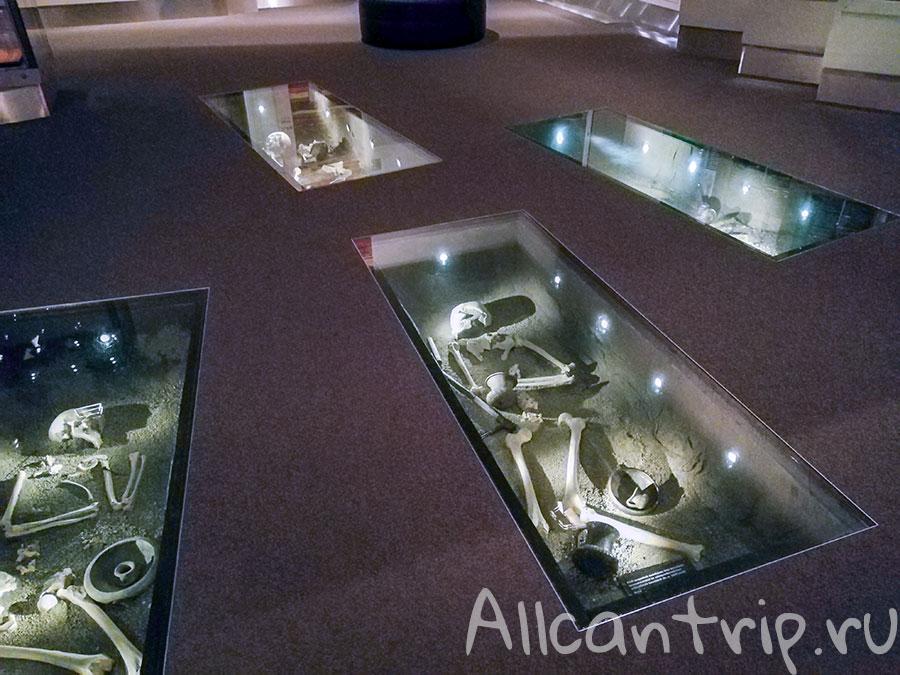 венгерский национальный музей скелеты